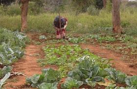 Agricultura familiar en el sur de Mozambique