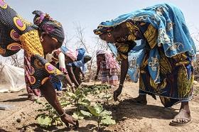 Mujeres cosechando