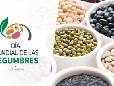 Logotipo del día mundial de las legumbres